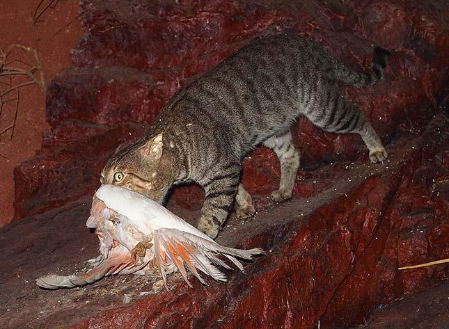 elvadult-macska-3