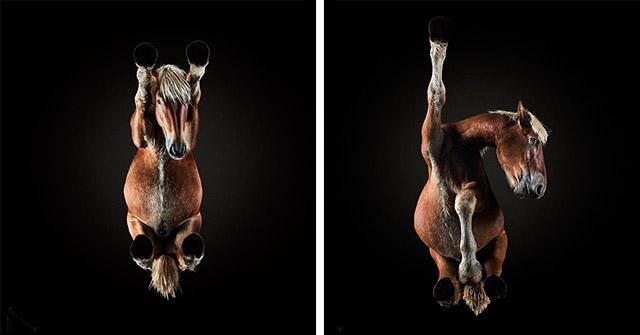 lovak-alulrol-fotozva